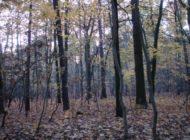 Bund tritt Zehntausende Hektar kostenlos an Naturschützer ab