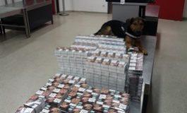 HZA-P: Zollhund Rex überführt Zigarettenschmuggler / Zoll am Flughafen Tegel stellt Zigaretten sicher