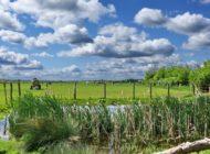 Zögern statt Handeln: EU drückt sich vor konkreten Maßnahmen zum Umwelt- und Gewässerschutz vor Tierarzneimittel-Belastungen