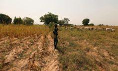 Über 100 Tote bei Massaker in Mali