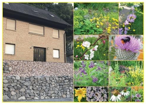 Was tun? Was tun! / Bienen brauchen blühende Gärten statt Schotterwüsten