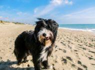 Reisen mit dem Hund / Damit lästige Parasiten den Urlaubsspaß nicht vermiesen, sind Vorsorgemaßnahmen unerlässlich