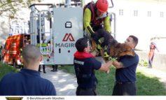 FW-M: Hund aus reißender Isar gerettet (Oberföhring)