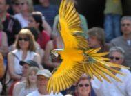 Zoos leisten wertvolle Bildungsarbeit / VdZ untersuchte pädagogische Angebote der 71 Mitglieder