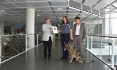 """HZA-M: Münchner Zollhund """"Crash"""" ausgezeichnet Rauschgiftspürhund erhält Ehrenplakette des Deutschen-Schäferhund-Verbandes"""