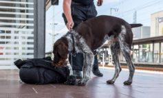 BPOL-BXB: Verdächtiges Gepäckstück im Bahnhof St. Ingerbt stellt sich als harmlos heraus