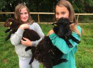 Neue tierische Gäste in Panarbora / Streichelzoo wartet auf Jung und Alt