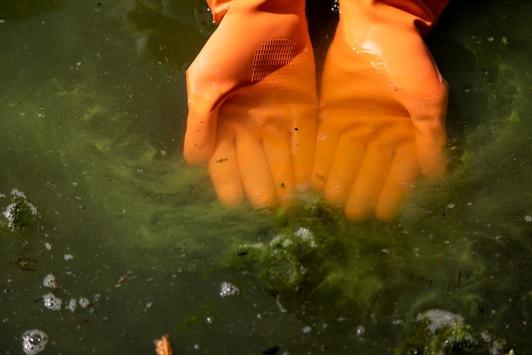 Wieder Blaualgen-Alarm: Schon mindestens 32 Badeverbote