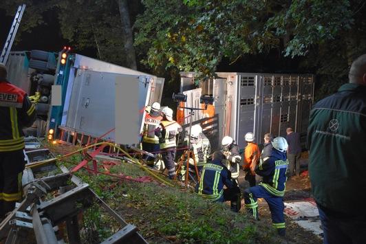 FW-ROW: Anhänger von Viehtransporter stürzt auf Bundesstraße um, mehrere Schweine verenden.