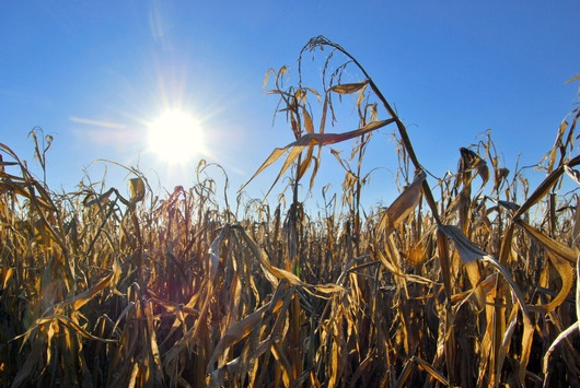 In Zeiten des Klimawandels wirtschaftlich bleiben – Dritte e2m-Wintertagung für Biogas-Anlagenbetreiber am 21. Januar 2020 in Walsrode
