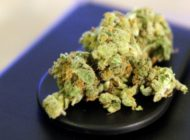 Drogenbeauftragte bei Cannabis kompromissbereit