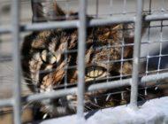 100 Franken Busse für eine gequälte Katze