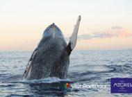 Umweltfreundlich reisen auf die Azoren - 100% klimaneutral! / Picotours kompensiert drei seiner individuellen Naturreisen komplett - und setzt Maßstäbe in Sachen umweltfreundlich Reisen