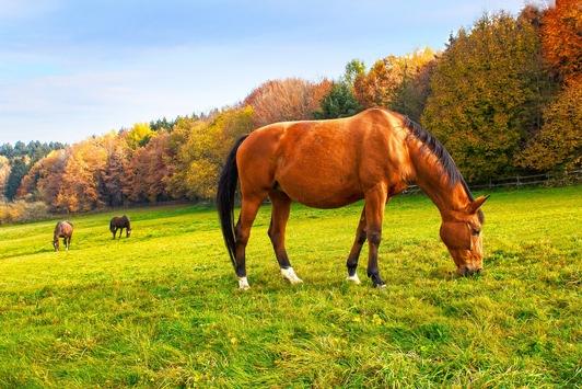 Alle Pferde – Alle Würmer / Jetzt ist es Zeit für die wichtige Herbst-Entwurmung