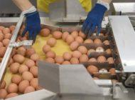 Schweizer Kunden greifen zu Schweizer Eiern