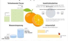 Orangen aus dem Zitrusprojekt von WWF und EDEKA: EDEKA-Orange punktet in Sachen Umweltfreundlichkeit