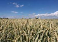 Klöckner: Chemieeinsatz im Agrarbereich mit Gentechnik reduzieren