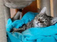 Besser zum Tierarzt gehen / Falsch verabreichte Medikamente können krank machen