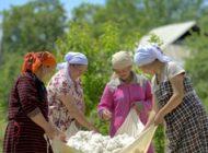 Rundum nachhaltig: 100 Prozent zertifizierte Baumwolle bei ALDI