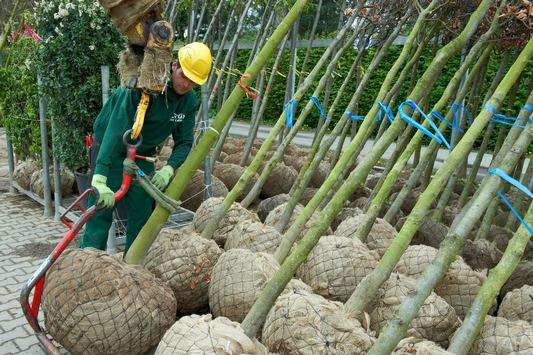 Zwischenbilanz der Baumschulwirtschaft zur Coronakrise: Versorgung der Bevölkerung mit Gehölzen auch weiterhin sichergestellt; Obstgehölze sind besonders nachgefragt