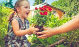 Ostern im Garten - was tun, wenn die Rose sticht? / Kleine Verletzungen aus der Hausapotheke verarzten
