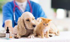 CosmosDirekt erweitert Angebot um Tierkrankenversicherung