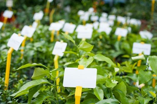 Sieben Millionen Pflanzenstecker und 20 Tonnen Kunststoff eingespart