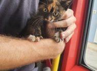 FW-M: Katzen in Not (Stadtgebiet)