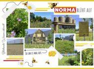 NORMA-Erfolgsprojekt zum Schutz von Bienen jährt sich und wird ausgeweitet - blühende Wiesen überall / Umweltinitiative für den Artenschutz feiert JuBEEläum
