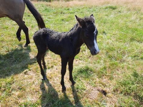FW-ROW: Feuerwehr rettet neugeborenes Fohlen aus der Wümme