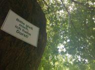 Hitzestress für Bäume: Zehn Eimer Wasser pro Woche als Patengeschenk / Jetzt noch Gehölzen durch den Sommer helfen