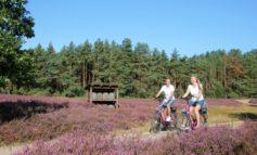Zur Heideblüte in die Lüneburger Heide / Beschilderte Rundtouren führen Radurlauber zu den schönsten Plätzen