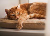 Arthrose: Katzen leiden leise