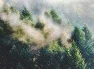 BÖRLIND veröffentlicht Nachhaltigkeitsstrategie Mission 2025
