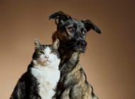 """""""AdoptMe"""" - I'm real / Die Fondazione Capellino startet eine einzigartige, poetische Kampagne für eine Welt, in der keine Katze oder kein Hund in einem Tierheim leben muss"""