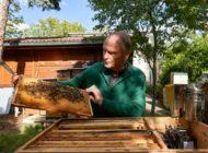 """Bienen als Sensoren für Pestizidschäden in der Umwelt / PRESSEEINLADUNG zur Präsentation des Forschungsprojekts """"Umweltspäher"""" der FU Berlin (Mittwoch, 21.10.)"""